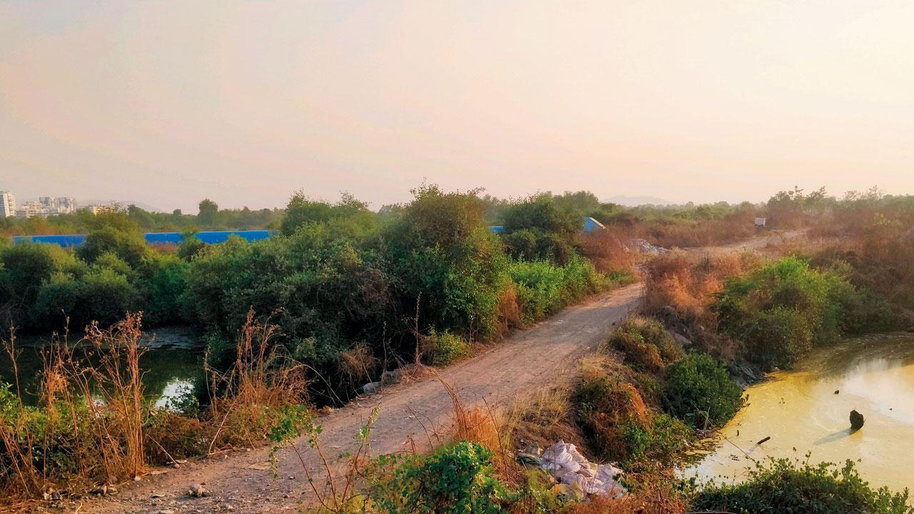 Mangroves_endangered
